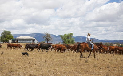 Massive Food Drive to Support Drought Affected Australian Farmers