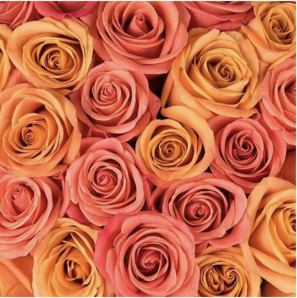 Tips when buying roses this mothers day